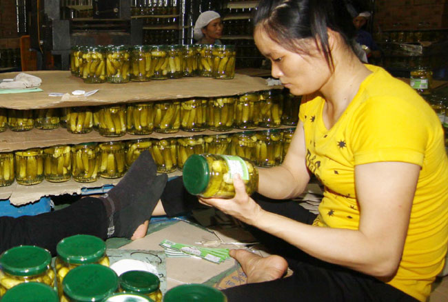 Record year for starting business in VN