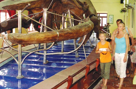 Big boned: Tourists look at the biggest whale skeleton preserved at the Van Thuy Tu Temple.