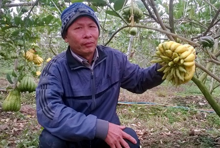 Nguyen Van Thiet, the first grower of Buddha's hand fruit in Dac So Commune, holds the best-looking fruit in his orchard.