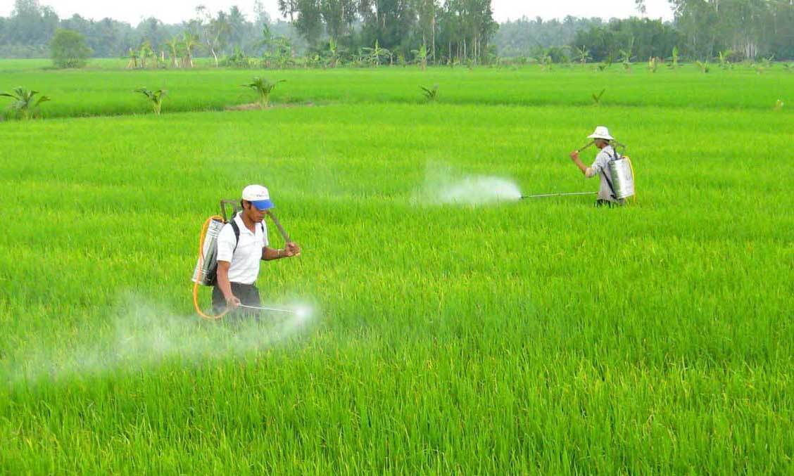 VN plans greener rice cultivation