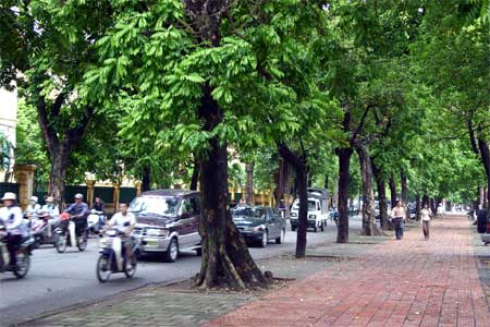 Is Ha Noi barking up the wrong tree?
