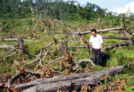 The total forest area of five provinces in the Central Highland region, has dropped by nearly 360,000 hectares (ha), compared with a previous survey in 2008.