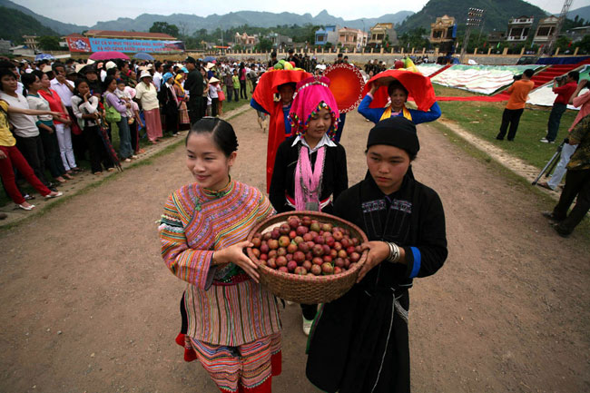Bac Ha plum tree gardens lure visitors for harvest in late May