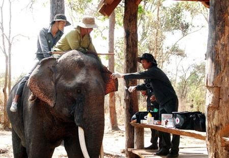 Hard times for elephants