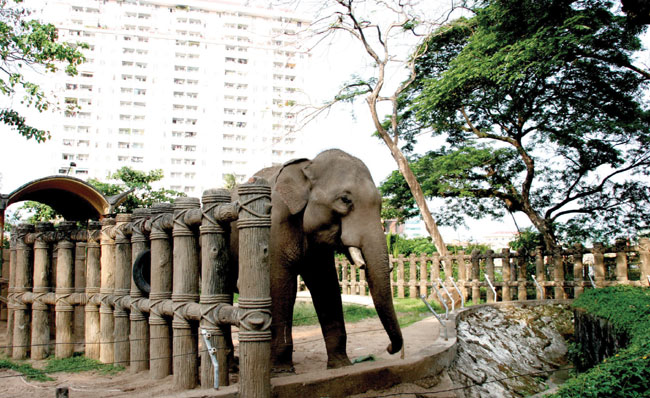 Animals to get more space at HCM City zoo
