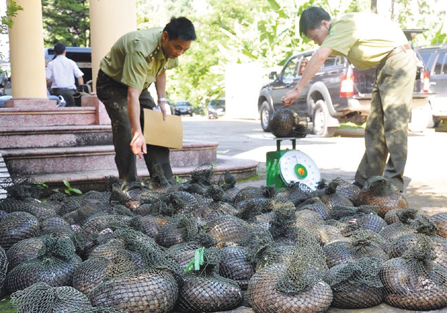 Image result for pangolin in china