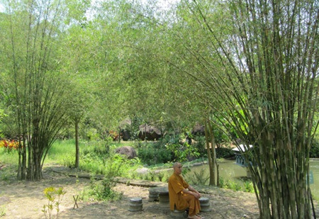 Monk in the mountains grows bamboo