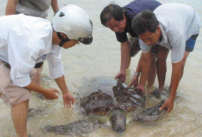 Sea turtles need protection from extinction