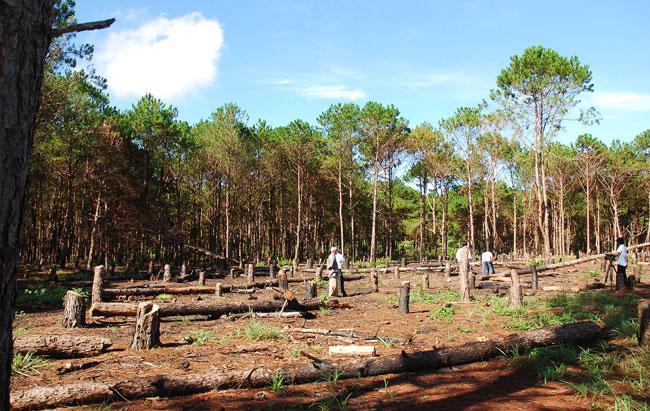 Alarm grows at illegal logging