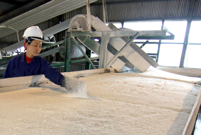 Sugar not so sweet as farmers plant other crops