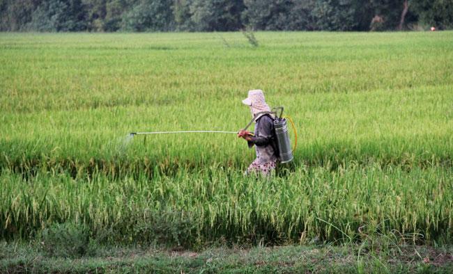 Pesticide overuse a top food safety concern