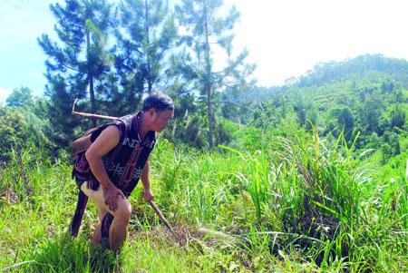 Farmers treasure trees amid modernisation