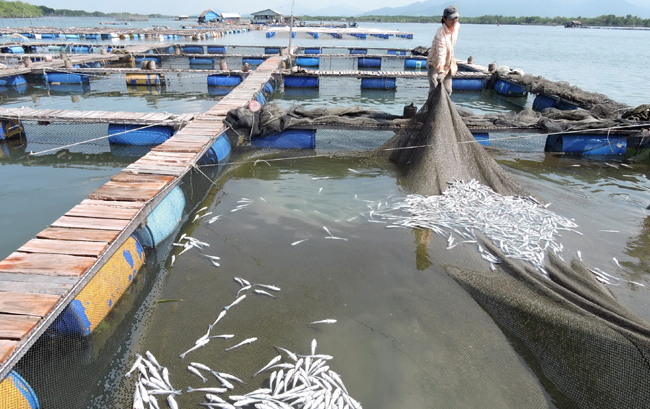 Residents use dead fish to protest polluted rivers
