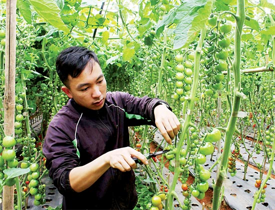New agricultural products all the rage ahead of Tet