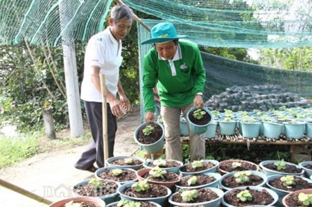 Farmers in the Cuu Long (Mekong) Delta will offer new varieties of flowers for the upcoming Tet (Lunar New Year) holiday, which falls on February 8 this year.