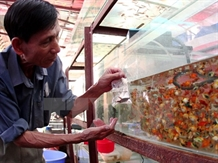 City ornamental fish exports rise