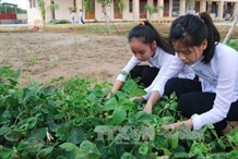 In Bến Tre school students grow clean vegetables
