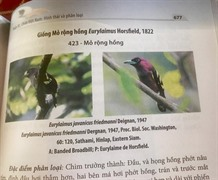 VN bird book launches fiery photo controversy