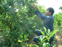 Lime is the prize for innovative VN farmer