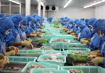 Shrimp export target ambitious but achievable