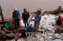 Use of fish byproducts could lead to higher profits: experts